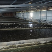sicasil water plant chateauneuf