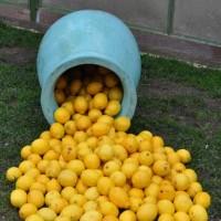 fete du citron 2014