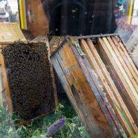 fete du miel mouans sartoux 2018