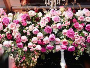 bal meilland belles rives rose