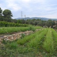terre jasmin patrimoine grasse