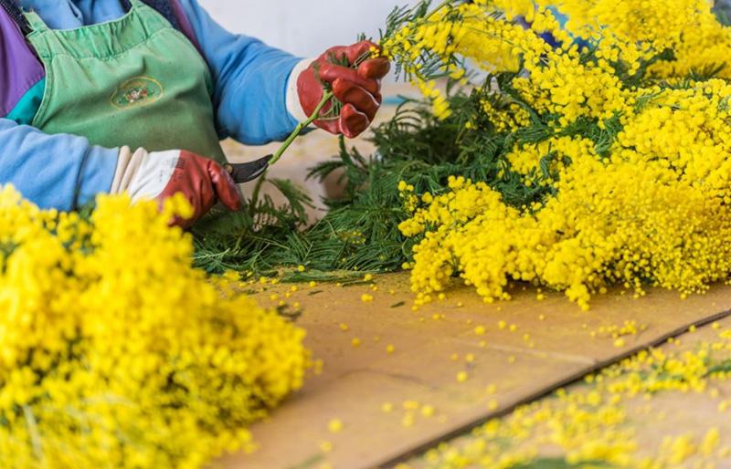 musée olfactif sport nature mandelieu la napoule