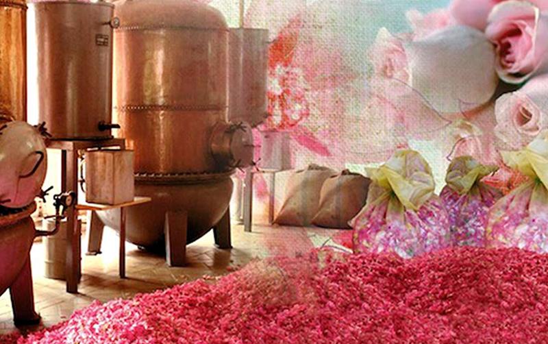 exporose parfume grasse